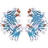 Gamma-globuliny