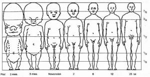 Zmiana proporcji ciała