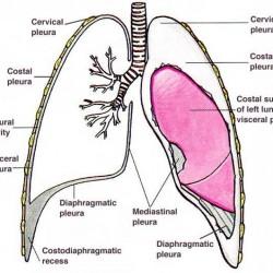 opłucna