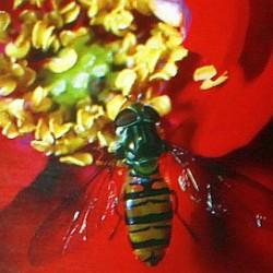 pyłki kwiatów alergia